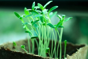 Green plant growing.