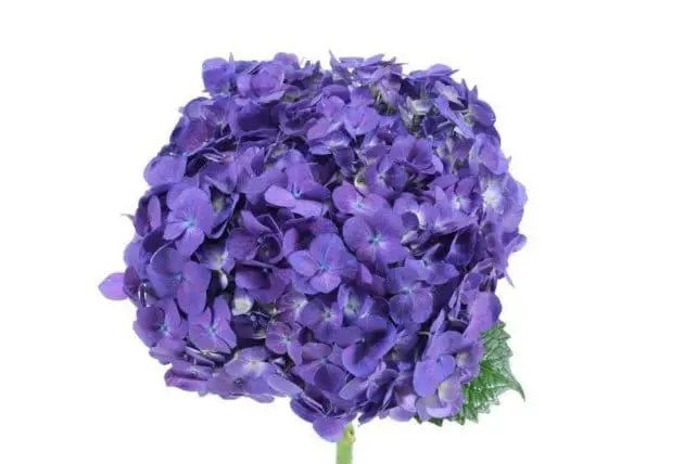 Where Can I Buy Fresh Flowers Wholesale