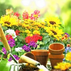 Giardino botanico Rivendell