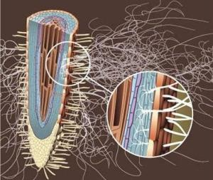 Ife, i funghi alle radici