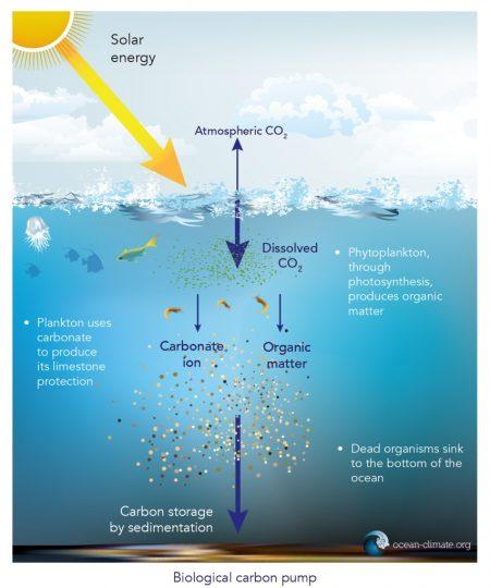 Ocean carbon