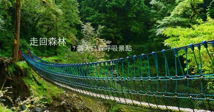 全台森林之旅|遠離城市,森遊七個綠意大口呼吸的境地