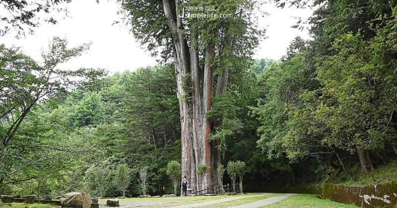 不同於八仙山低海拔氣候涼爽,大雪山國家森林遊樂區年平均氣溫約在15-18度,較為涼冷,所能接觸到的生態、物種更有不同。原始森林裡扁柏生長千年的環境、小神木、天池,排行台灣神木第11名,1400歲的紅檜神木,還有各種鳥類穿梭在林間,野生動物也因大雪山良好地理環境,在此棲息。