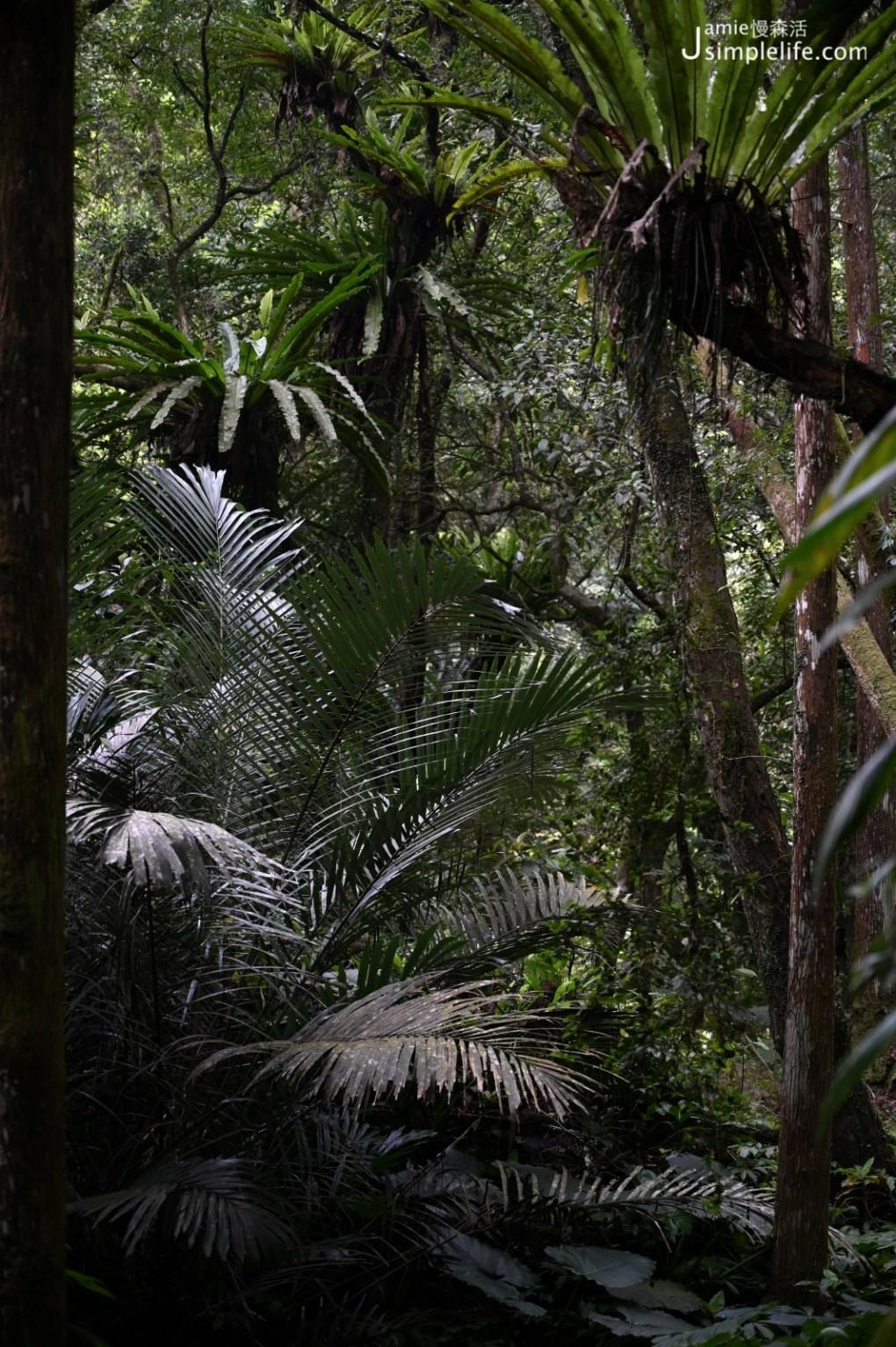 新北三峽「滿月圓國家森林遊樂區」蕨類植物