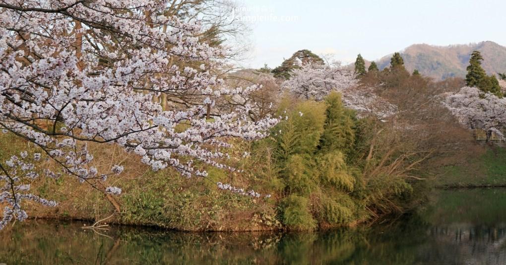 日本福島會津若松城城外,櫻花與山景的美