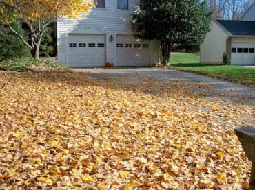 Before Leaf Removal in Rockville