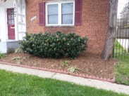 After Clean Up and Mulching in Takoma Park
