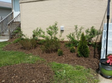 After Clean Up and Mulching in Kensington Maryland