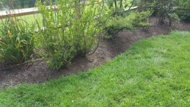 After Weeding and Clean Up by JSV Lawn Care Service, JSV Lawns, JSV Lawns of MD. Lawn Care, Landscaping, Clean Up, Weeding, Weed Pulling, Montgomery County, Maryland, Montgomery Village