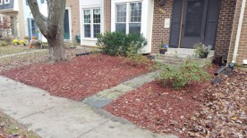 After Leaf Removal, Clean Up by JSV Lawn Care Service, JSV Lawns, JSV Lawns of MD. Lawn Care, Landscaping, Clean Up, Montgomery Village, Montgomery County, Maryland