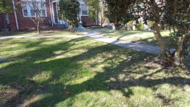 After Leaf Removal, Clean Up by JSV Lawn Care Service, JSV Lawns, JSV Lawns of MD. Lawn Care, Landscaping, Clean Up, Takoma Park, Montgomery County, Maryland