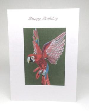 Parrot Artwork Card - Ref 211