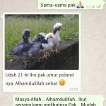 Salah Salah Satu Testimoni dari Pelanggan Kami di Riau Tentang Keberhasilanya Menetaskan Telur Ayam Hias yang Kami Kirimkan