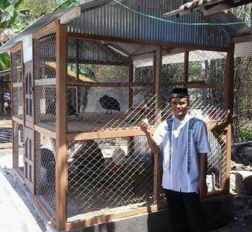Mas Fariq di Lamongan di Samping Kandang Kalkun Bronze dan Ayam Mutiara