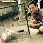 Bibit Ayam Kalkun Pesanan Mas Putra di Trowulan Kab  Mojokerto Jawa Timur