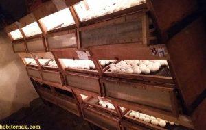 Mesin Penetas Telur