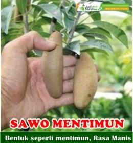 Sawo Mentimun Buah