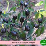 Benih Cabe Black Royal (Maica Leaf)