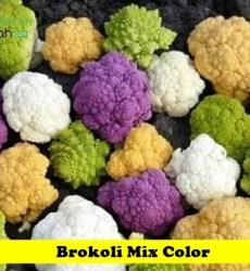 Brokoli Mix Color Maica Leaf