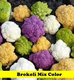 Brokoli Mix Color Maica Leaf