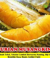 Buah Durian Musangking Unggul