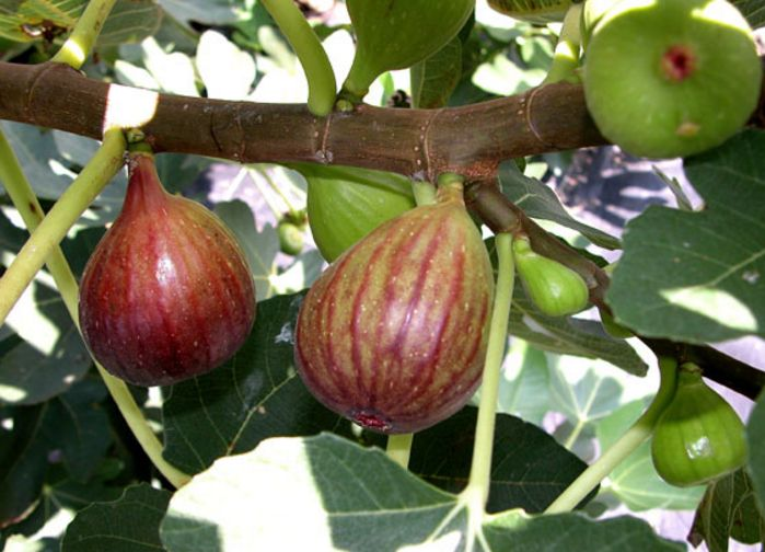 Image result for Buah tin site:blogspot.com
