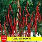 Benih Cabe PM 999 F1-25 Gram (Panah Merah)