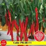 Benih Cabe Pilar F1-25 Gram (Panah Merah)