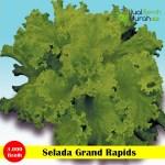 Benih Selada Grand Rapids-25 Gram (Cap Panah Merah)
