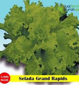 Selada GRAND RAPIDS_Panah Merah