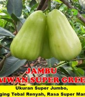 Buah Taiwan Super Green