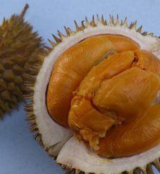 Buah Durian Duri Hitam Unggul