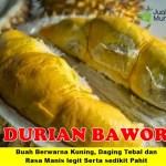 Bibit Durian Bawor 3 Kaki 70cm