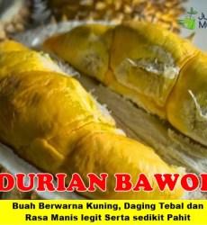 Durian Bawor Unggul