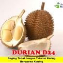Durian D24 Unggul