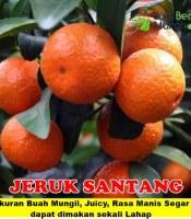Jeruk Santang Unggul