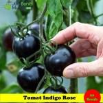 Benih Tomat Indigo Rose (Maica Leaf)