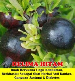 Delima Hitam