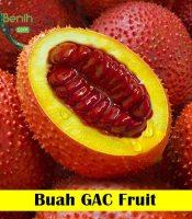 Buah GAC Fruit Maica Leaf