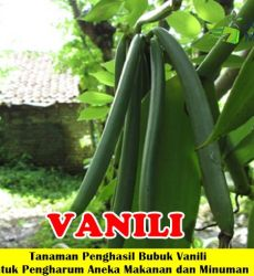 Vanili