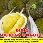 Jual Bibit Durian Berkualitas Unggul