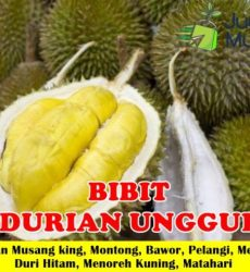 Jual Bibit Durian Unggul
