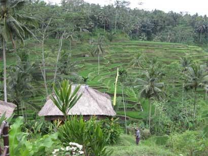 Tegalalang Gianyar Bali