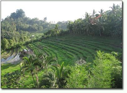 bukit_jambul di Bali Timur