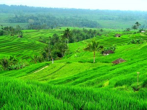 jatiluwih Tabanan Bali