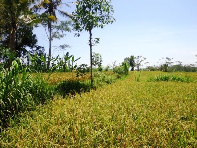 tanah dijual di ubud bali