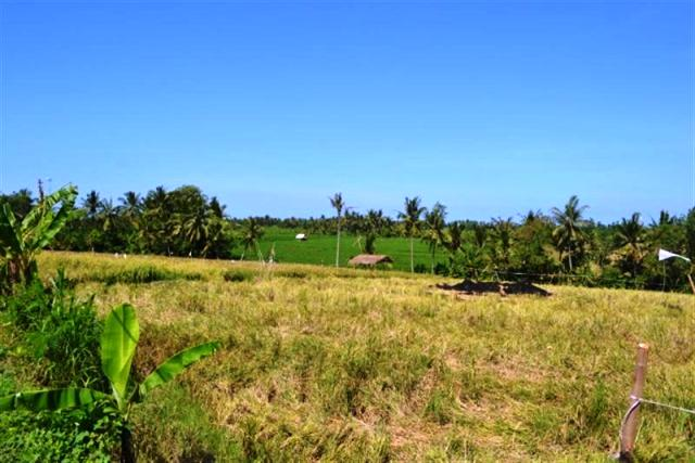 land for sale in canggu, bali