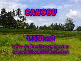 Jual tanah di Bali 1.350 m2 view sawah,sungai di Canggu Pererenan