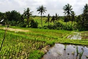 Tanah dijual Di Canggu Bali dekat pantai Pererenan Canggu – TJCG003E
