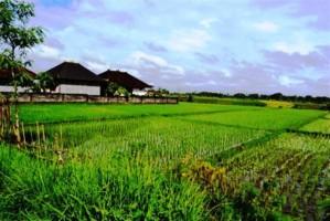 Jual Tanah di Canggu Bali dekat Pantai Mengening Canggu 24 are - TJCG015E